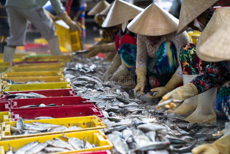 排序对篮子的被抓的鱼由TAC Cau捕鱼港口的,我越南女工孔Kien Giang,南部三角洲省  免版税图库摄影