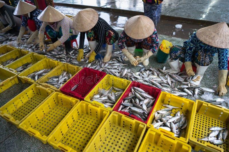 排序对篮子的被抓的鱼由TAC Cau捕鱼港口的,我越南女工孔Kien Giang,南部三角洲省  库存图片