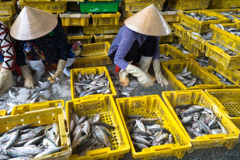 排序对篮子的被抓的鱼由TAC Cau捕鱼港口的,我越南女工孔Kien Giang,南部三角洲省  免版税库存图片