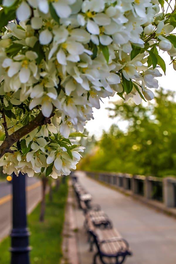 排行一条风景路的白花 免版税图库摄影