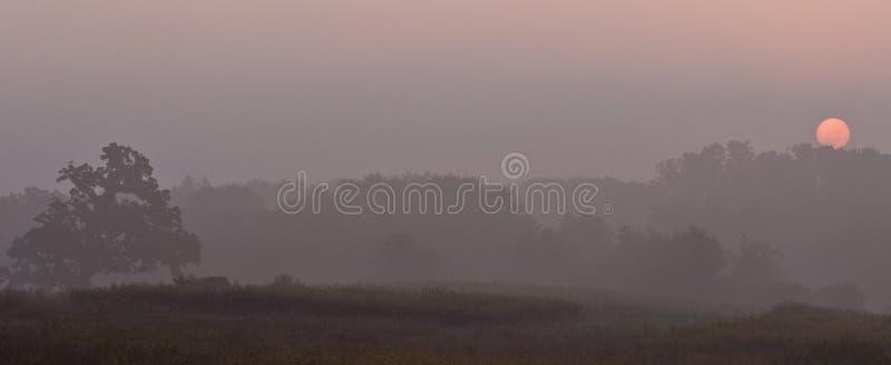 排行在日出结构树的薄雾早晨 库存图片