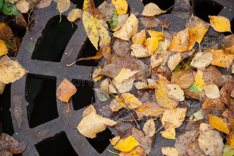 排水设备下水道出入孔在秋季公园 免版税图库摄影