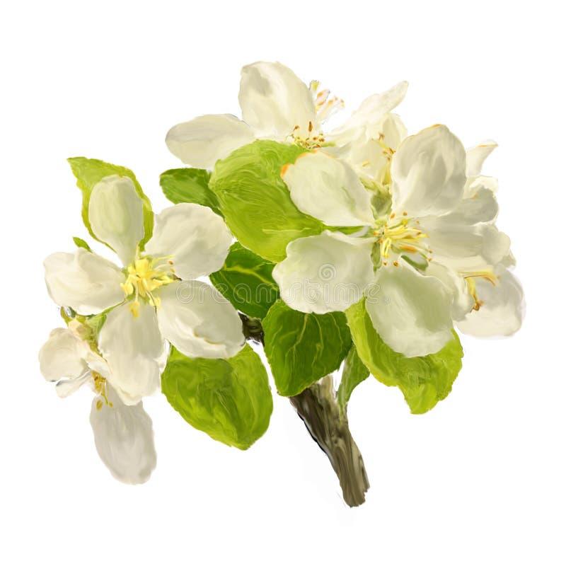 掠过白色开花的苹果花冲程分支  库存图片