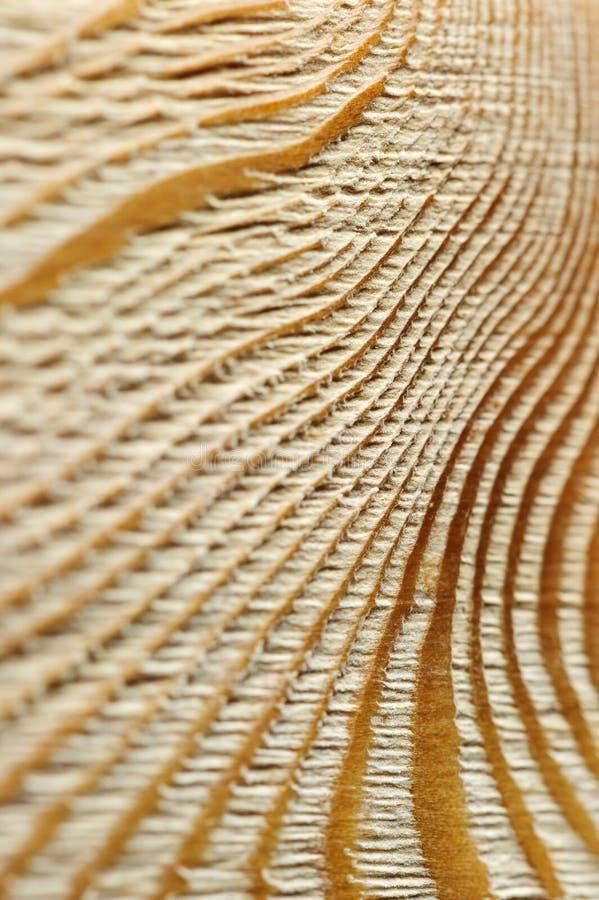 掠过的木纹理 图库摄影