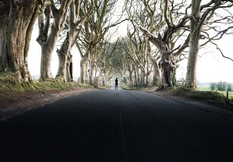 探索一个古老树隧道 库存照片