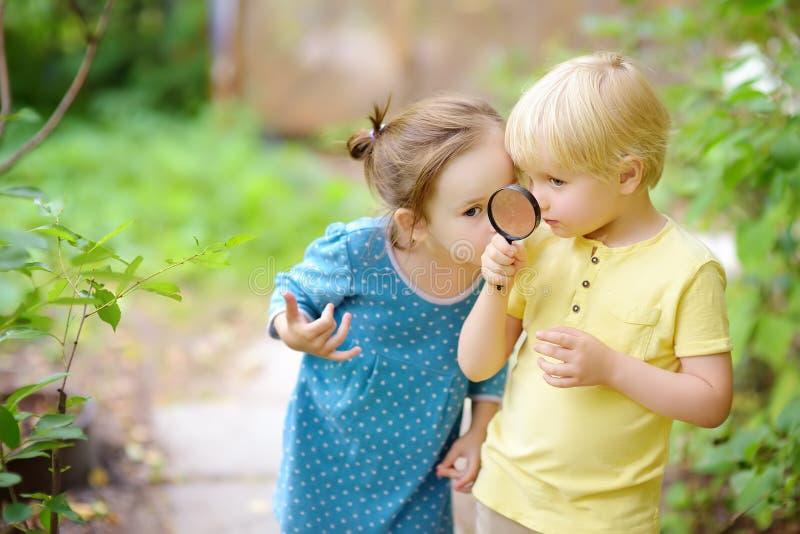 探索与放大镜的孩子自然 ?? 看与放大镜的小男孩和女孩 库存照片