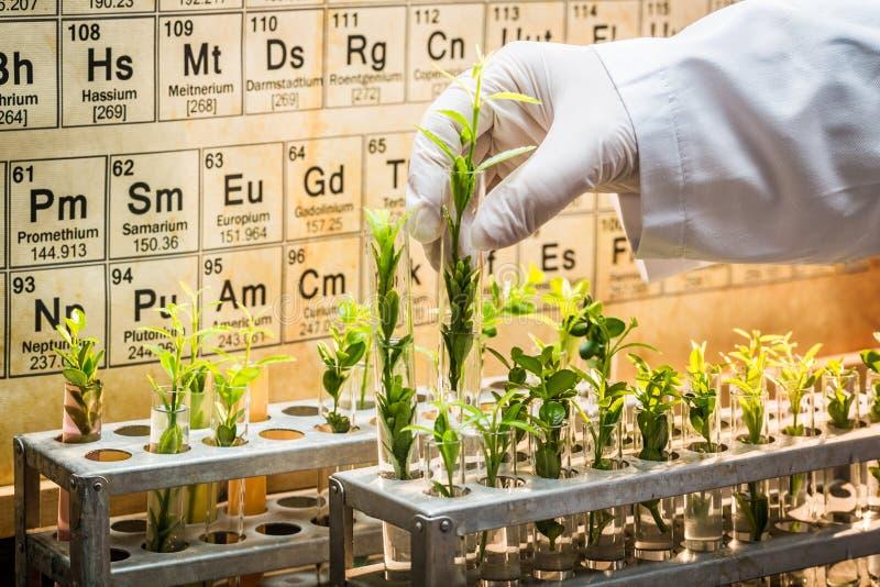 探索新的方法植物愈合的配药实验室 免版税库存图片