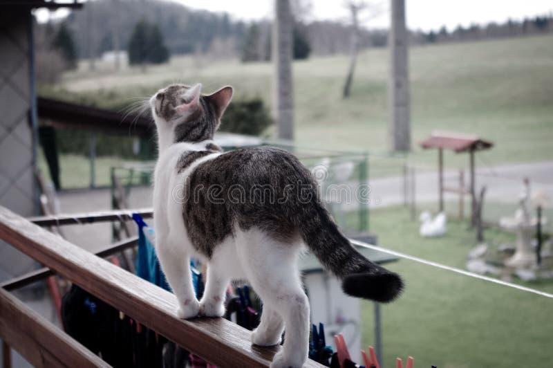 探索的猫 库存照片