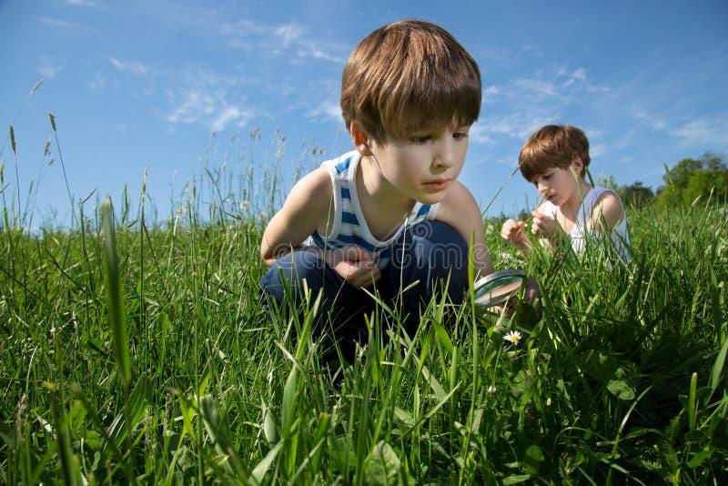 探索自然的秀丽在绿色领域的两个小好奇男孩在春天 库存照片