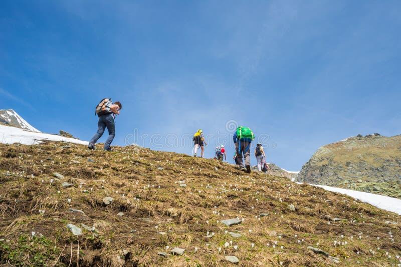 探索阿尔卑斯,室外活动的小组远足者在夏天 图库摄影