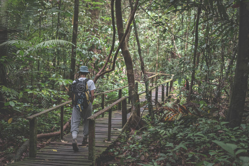 探索Kubah国家公园,西部沙捞越,婆罗洲,马来西亚的庄严密林背包徒步旅行者 库存图片