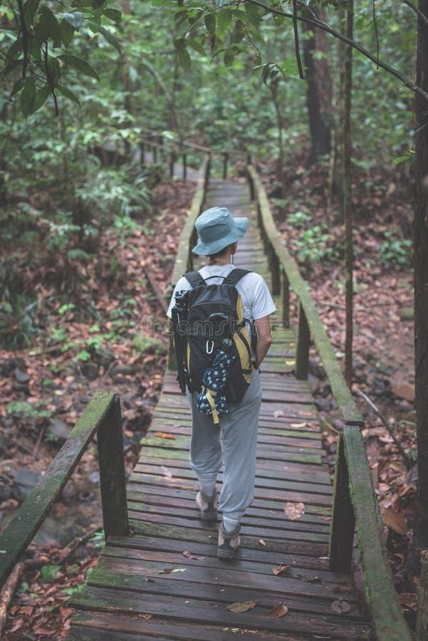 探索Kubah国家公园,西部沙捞越,婆罗洲,马来西亚的庄严密林背包徒步旅行者 免版税图库摄影