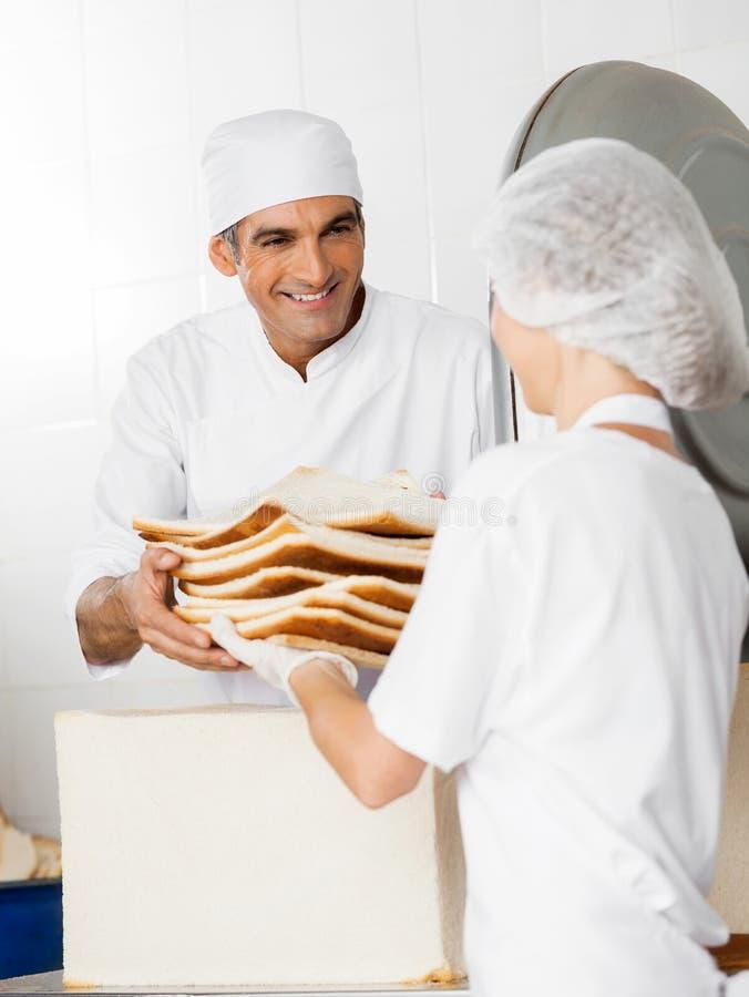 接受面包废物的贝克从工友 免版税库存照片