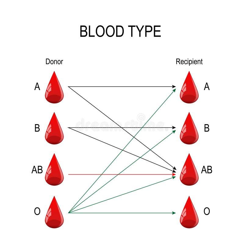 接收者和捐款人 血液的类型 向量例证