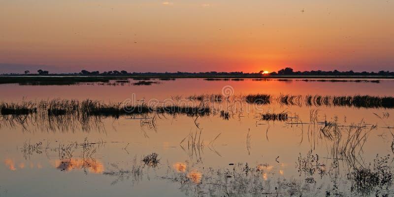 接触在CHOBE河之外的落日天际 库存图片