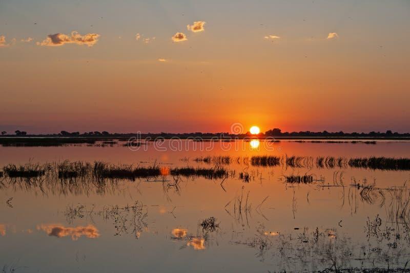 接触在CHOBE河之外的落日天际 库存照片