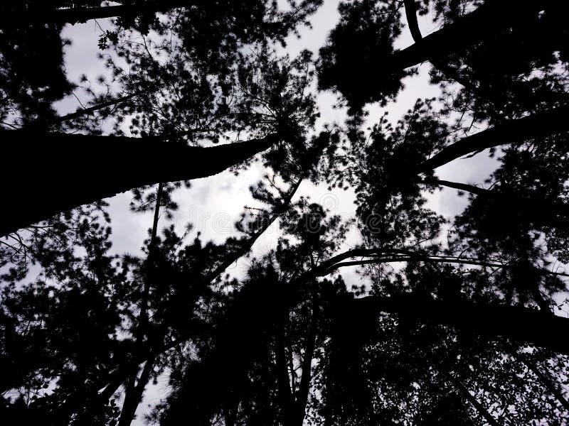 接触天空的被迷惑的树 库存照片