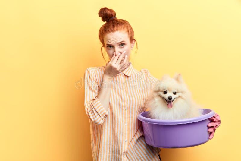 接触她的鼻子的姜女孩,她找到一只流浪狗并且要洗涤它 库存图片