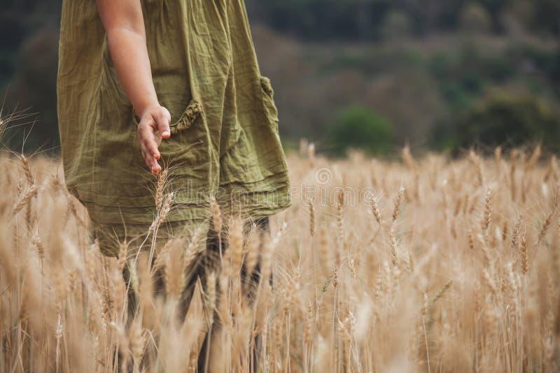 接触麦子的耳朵的在大麦领域的妇女手 免版税库存照片