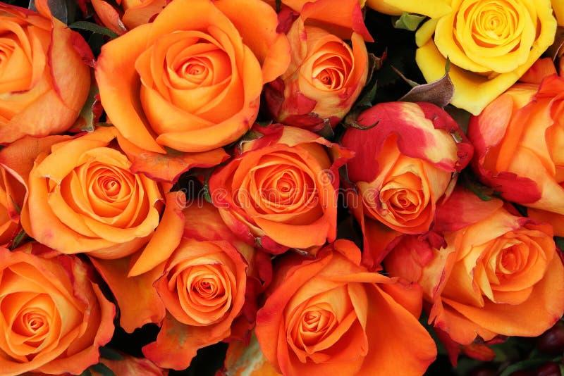 接近从美丽的五颜六色的玫瑰花束  免版税库存图片