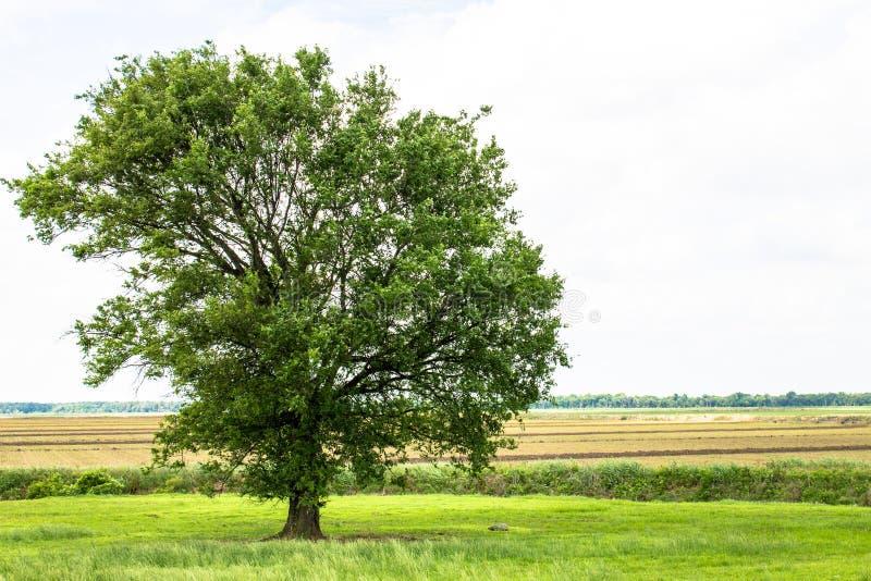 接近在农田的暴风云 免版税库存图片