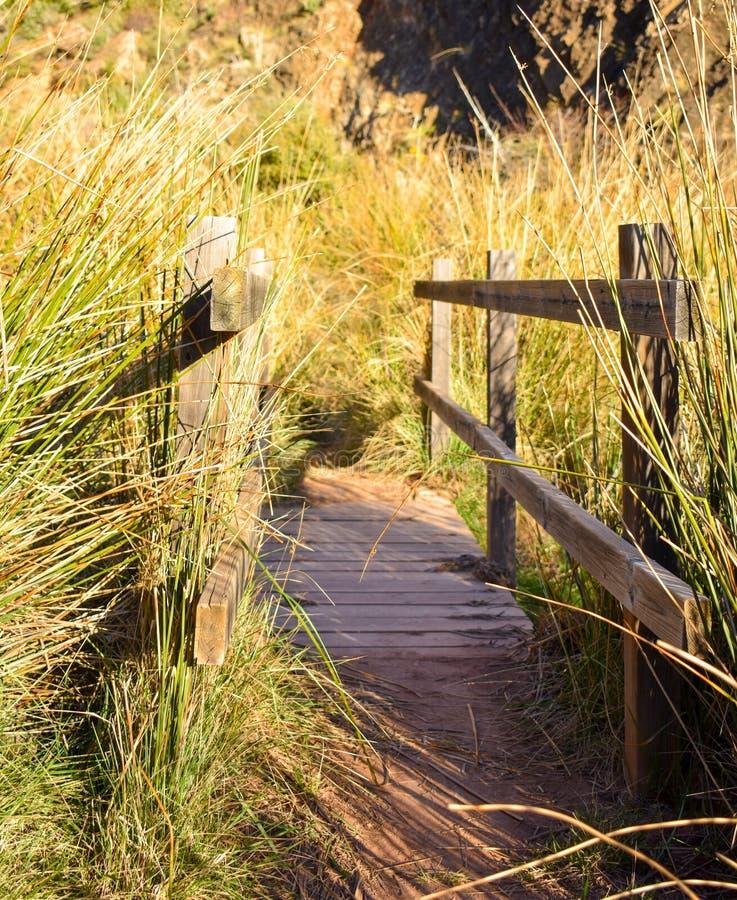 接近在河大量的一个木桥草本和仓促在日出的晴朗的光 桥梁有一木 免版税库存图片