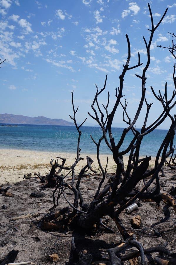 接近海滩的被烧的灌木 库存图片