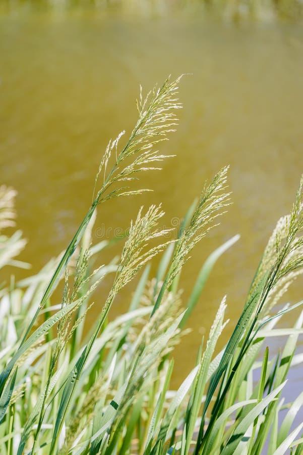 接近湖的绿色甘氨酸二氧化铈最大值 免版税库存照片