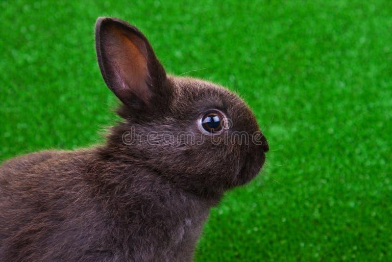 接近的兔子 免版税库存照片