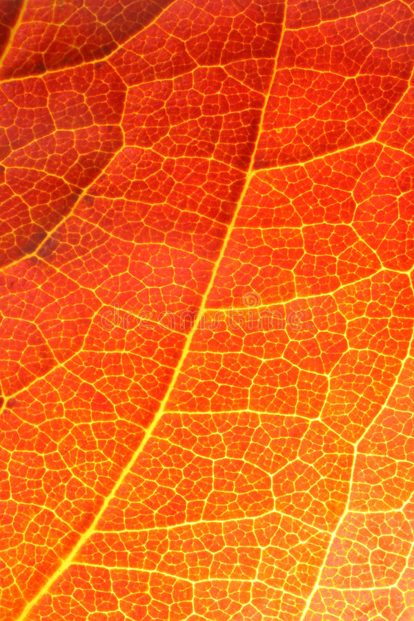 接近的叶子桔子 免版税图库摄影