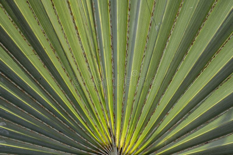 接近的日风扇叶子掌上型计算机晴朗的结构树 免版税库存图片