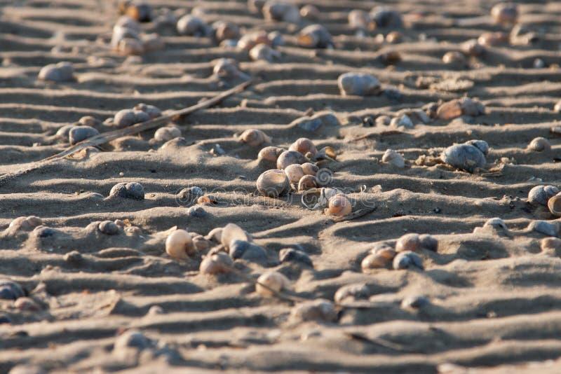 接近的沙子贝壳 库存图片