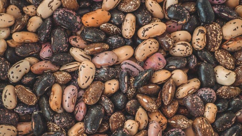 接近的混合豆背景,混合豆种子 收集种子 健康的食物 库存图片