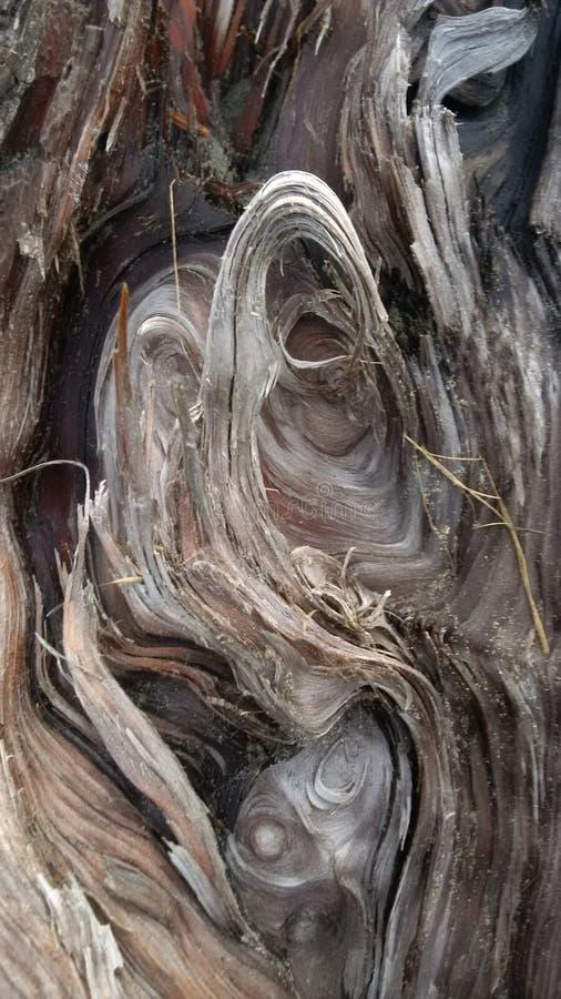 接近的漂流木头 免版税库存照片