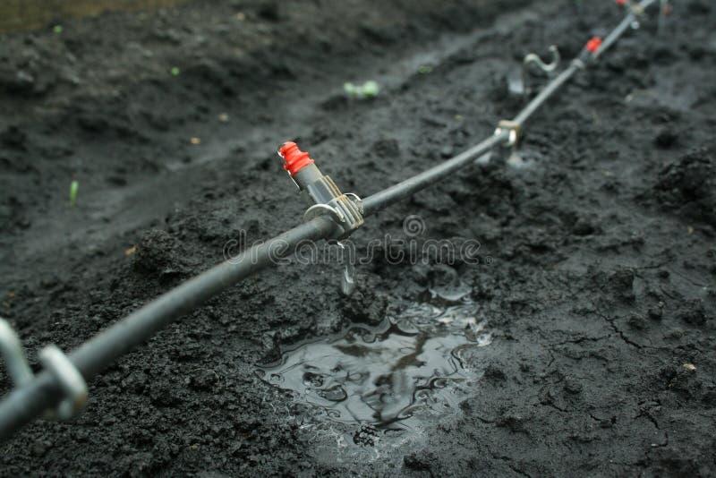 接近的灌溉系统 免版税库存照片
