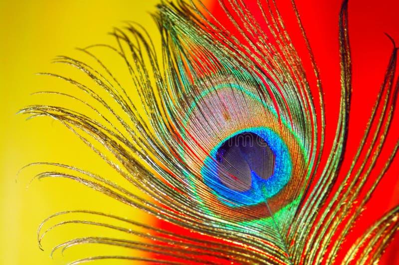 接近的羽毛孔雀 免版税图库摄影