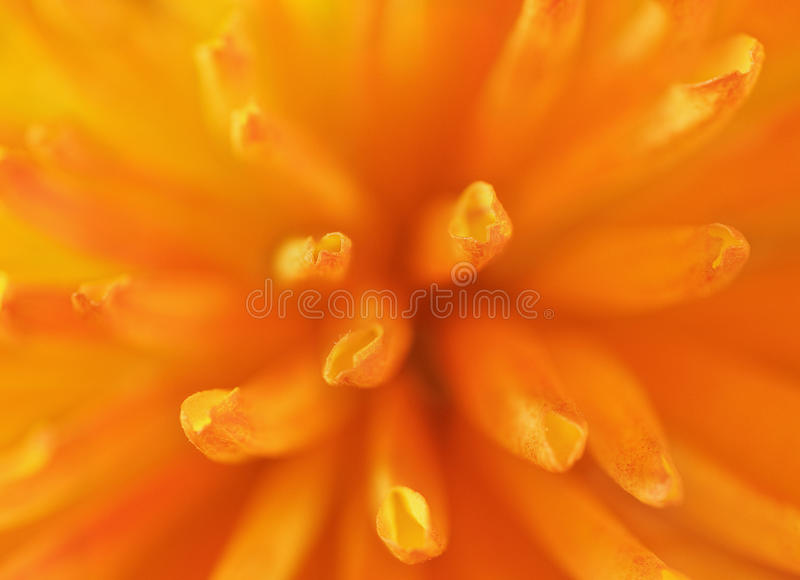 接近的花橙色照片 免版税库存图片