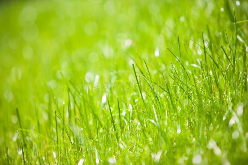 接近的草绿色 图库摄影