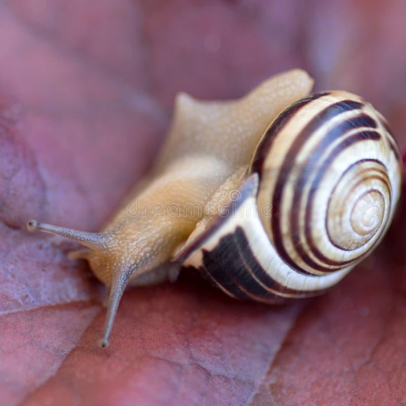 接近的蜗牛 库存图片