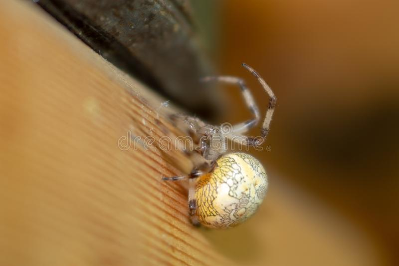 接近的蜘蛛 库存图片