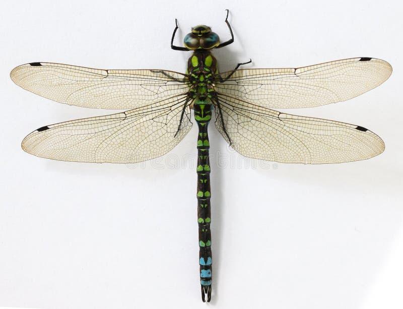 接近的蜻蜓 库存照片