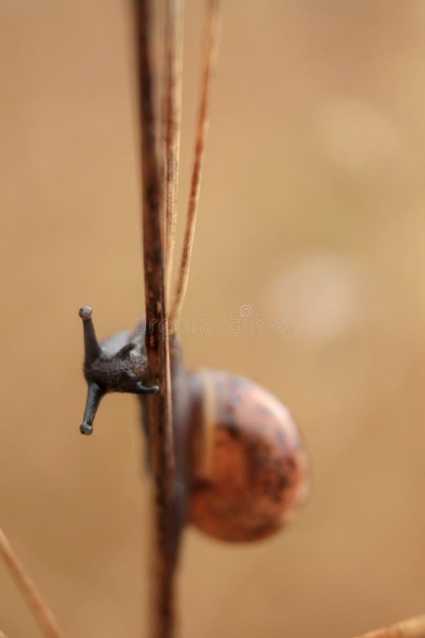 接近的观点的在植物词根的蜗牛 免版税库存照片