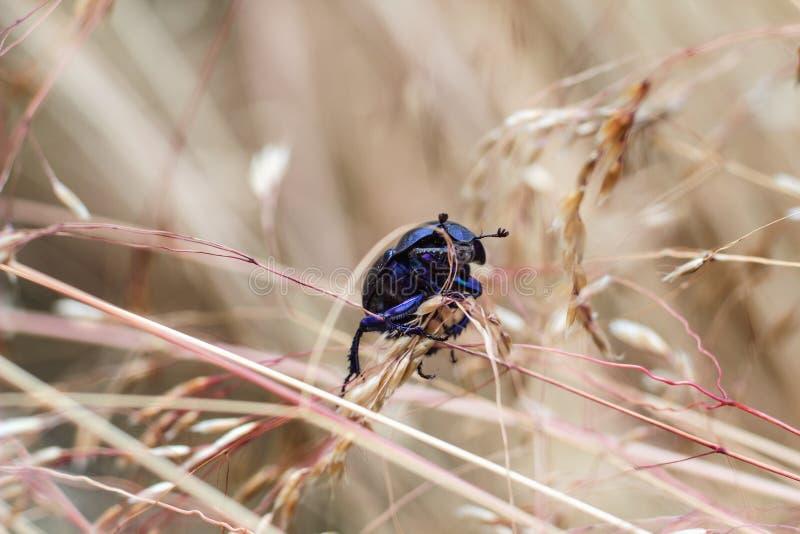接近的观点的昆虫甲虫 库存照片