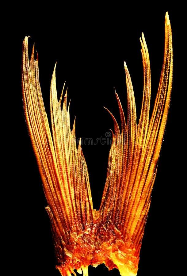 接近的鱼尾标 免版税库存照片