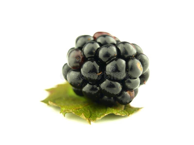 接近的黑莓非常 库存照片