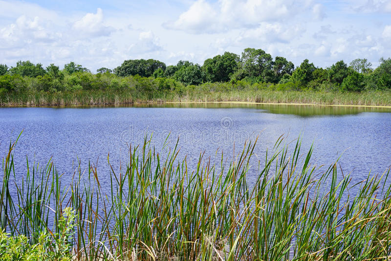 接近Brevard动物园入口的一个平安的湖 免版税库存照片