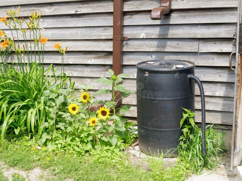 接雨水的桶 免版税库存图片