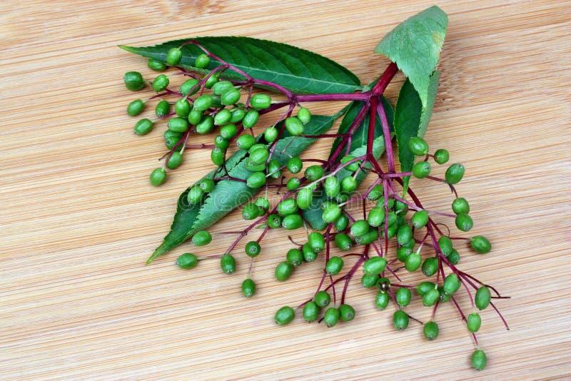 接骨木浆果未成熟的果子  免版税图库摄影