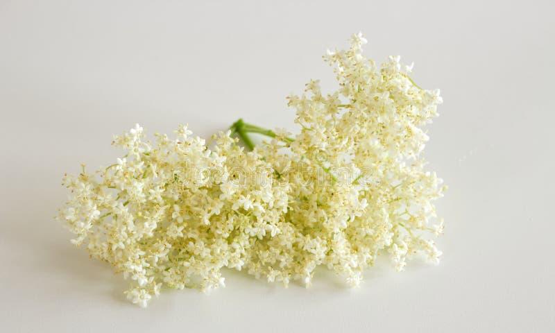 接骨木浆果白色背景的接骨木花老黑 用花和莓果经常医药上 库存图片