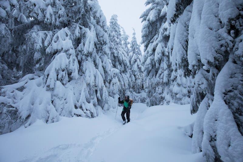 推挤通过在一个多雪的倾斜的雾的Backcountry滑雪者 游览在严冬情况的滑雪 滑雪游览车炫耀 免版税库存照片